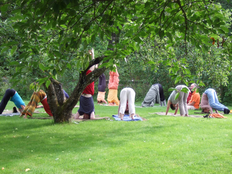 yoga-under-appletree-800n_02